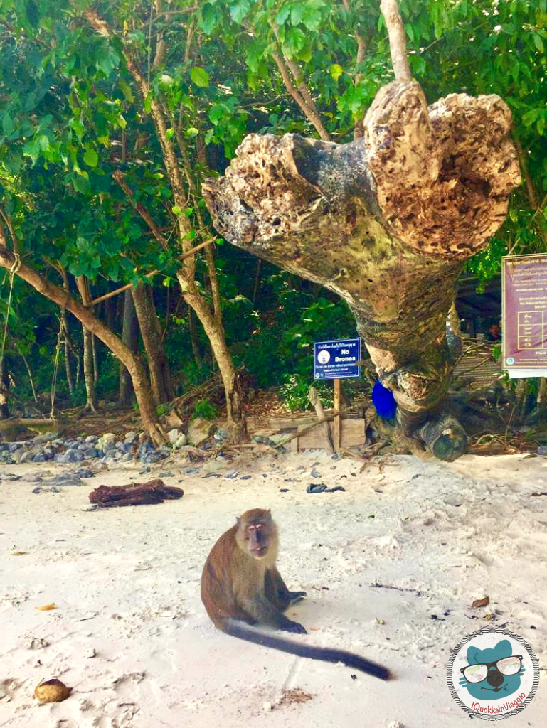Thailandia - Monkey Beach