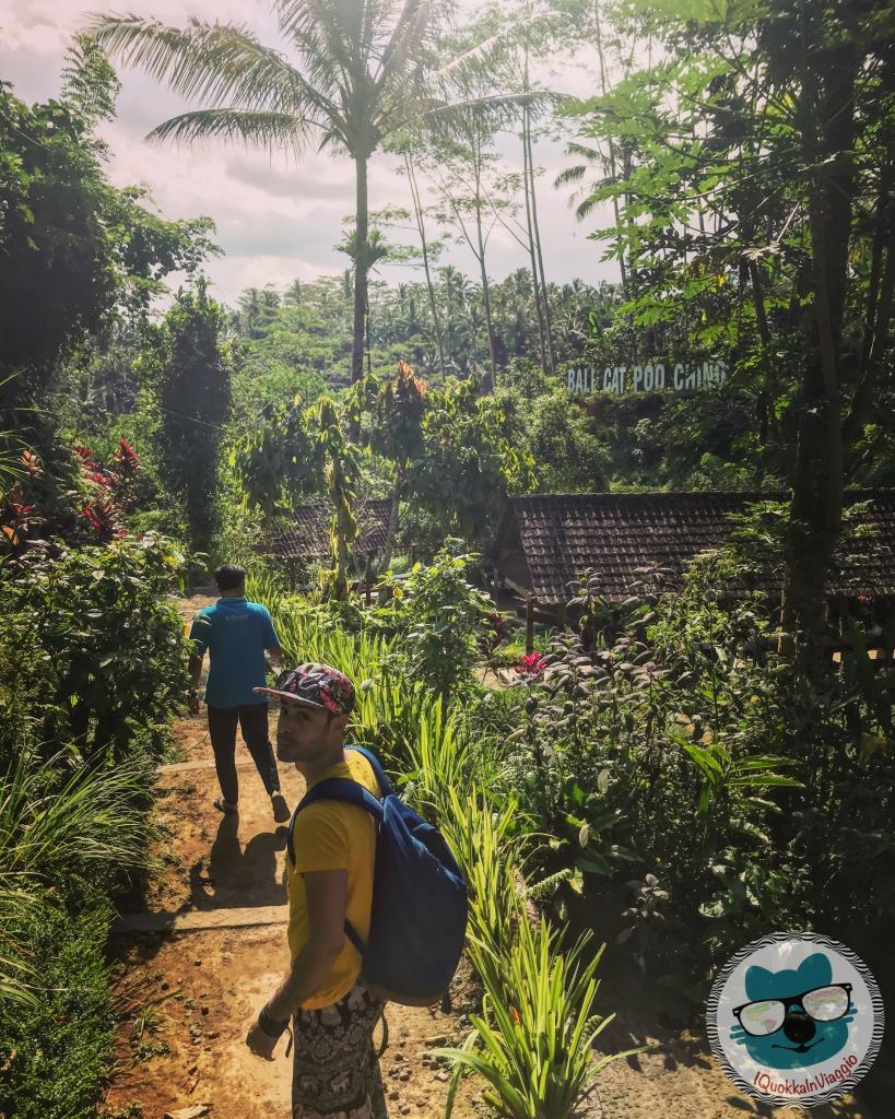 Cosa Vedere a Bali - Itinerario Est - Coffee Plantation