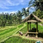 Bali - Pura Gunung Kawi Rice Terrace