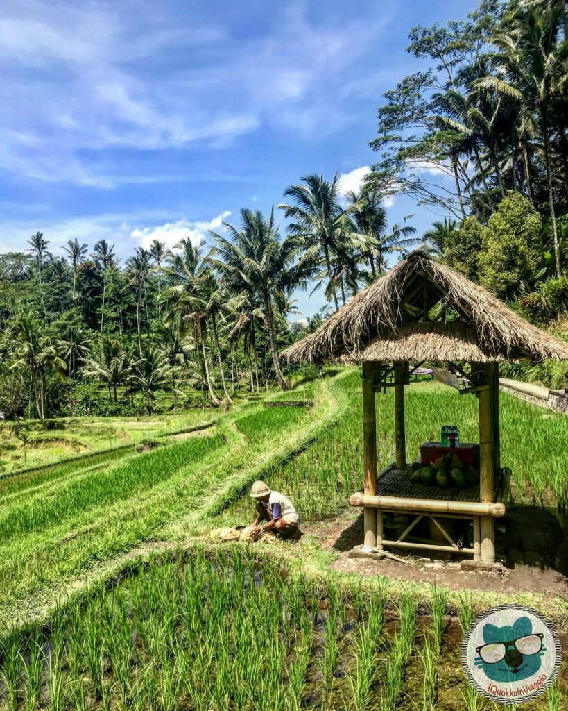 Cosa Vedere a Bali - Itinerario Est - Pura Gunung Kawi Rice Terrace