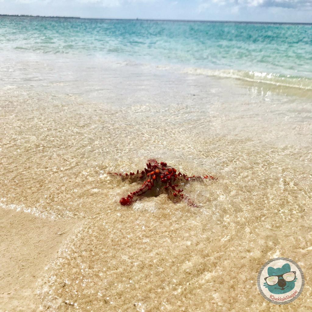 Zanzibar - Nakupenda Stella Marina