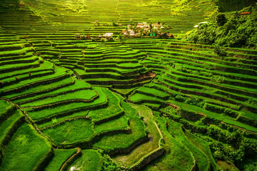 Filippine - Luzon Batad Rice Terrace
